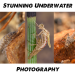 Stunning Fly Fishing Underwater Insect Photography - Fly FishingEntomology Course